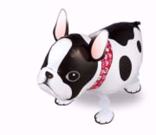 Picture of Airwalker Französische Bulldogge